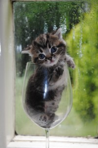 A small cat in a rather large wine glass