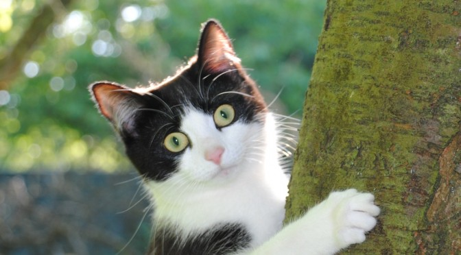 RNIB Guide Cats Eyes for the Blind April Fools