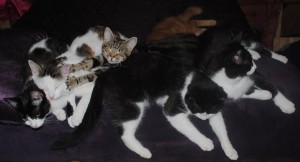 Sleeping cat pile, CatNap