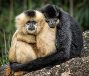 Monkey hugs - National Hug Day
