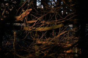 Light falling on darkened tree branches